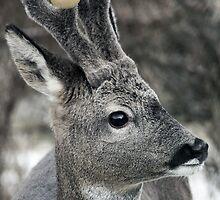 Christmas Deer Cheer by simpsonvisuals