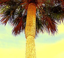 Sabal Palm by AuntDot
