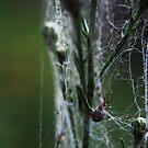 spiders home by JillianLee