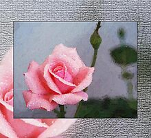 Pink Rose on Grey by drivebye