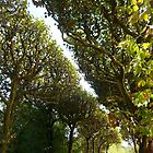 Paris - Jardin des Plantes by ChristineBetts