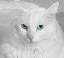Angel Eyes 3 by Scott Mitchell