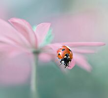 Lady in Pink by Jacky Parker