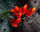 Orange Calla Lilies of Gray by LaRoach