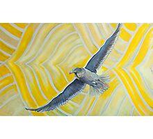 Seagull  Photographic Print