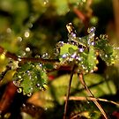 Drops of morning dew by Neutro