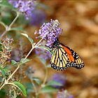 Butterfly by joAnn lense