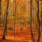 Autumn Magic by Nicolas Goulet
