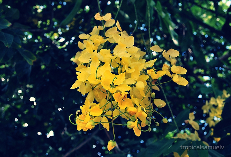 Tropical Winter Flowers by tropicalsamuelv