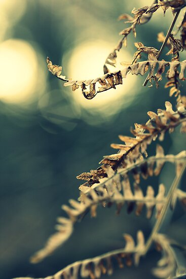 Winter Fern by Astrid Ewing Photography