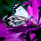 Butterfly Working the Daisys. by Ohlordi
