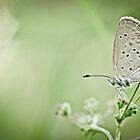 Moth in the bokeh by studioomg