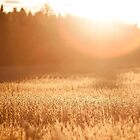 Fields of Gold by Nicolas Goulet