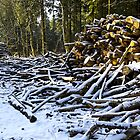 Snow covered woodpile. by Andrew Harker