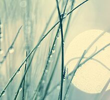 morning blues by Ingz