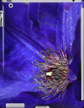 Blue Clematis  by LudaNayvelt