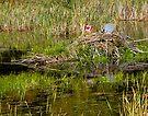 High Tech Patriotic Beavers by Yukondick