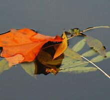 Leaves Floating Away by Jo Nijenhuis