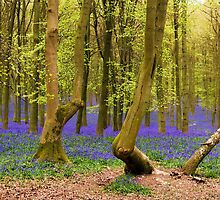 Bluebells Wood 03 by lc-photo