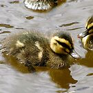 Duckling by Michelle Ricketts