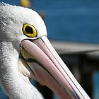 Pelican Pose by Michelle Ricketts