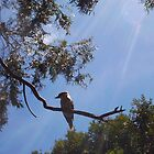 Kookaburra On My Street - Nine - 19 11 12 by Robert Phillips