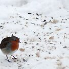 Christmas with a Robin by Steve Hammond