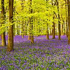 Bluebells Wood 08 by lc-photo