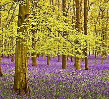Bluebells Wood 10 by lc-photo
