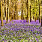 Bluebells Wood 16 by lc-photo