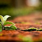 Brickwork, Weeds and Moss by TehRen