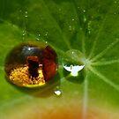 in the drop ... by jean-jean