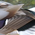 Mallerd Duck Feathers 09 by Magic-Moments