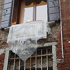 Venetian Lace on Window by Kitrina Arbuckle