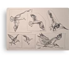 Seagulls, preliminary pen sketches 2012Ⓒ framed 50x38cm FOR SALE at lizmooregolding@gmail.com Canvas Print
