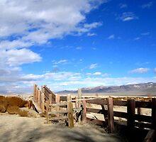 Ranch Land by marilyn diaz