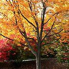 Autumn Colors by SolasandScath