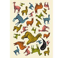 Camelids - Abrace la Diversidad Photographic Print