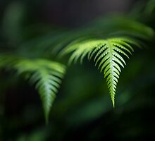 Fern in Dappled Sunlight by Jim Worrall