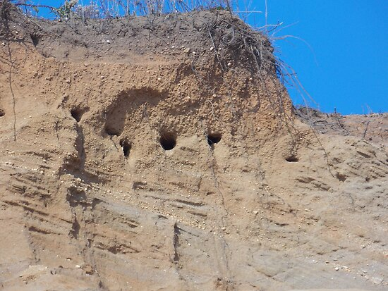 Swallows nests in the cliffs by Choux