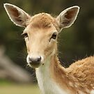 European Fallow Deer by AngelaHumphries