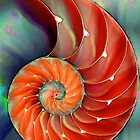 Nautilus Shell - Sea Shells by Sharon Cummings