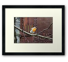 Robin Red Breast out doing his Christmas Shopping Framed Print