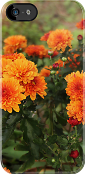 Marigolds by AbigailJoy