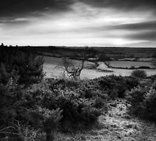 On Gorse BW by Andy Freer