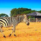 Zebra on the grassland by nrasic