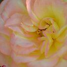Chameleon Rose by TheaShutterbug