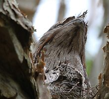 Peek A Boo by byronbackyard