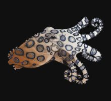 Blue-Ringed Octopus by Kelly O'Brien