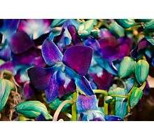 Purple and Blue Orchids Photographic Print